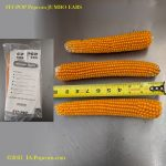 FIT-POP-Store-on-the-COB-Four Jumbo Ears